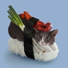 Happy caturday! We thought we'd celebrate it with cats dressing up as sushi. Too cute! #cosplay #catsplay