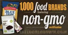 Looking for NON-GMO Food? Here's a list of 1000 different companies with NON-GMO products. If you're concerned about GMO food you'll want to bookmark this page.