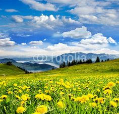 Auszeit: Pusteblumenwiese vor Schweizer See :) Mountains, Nature, Travel, Time Out, Swiss Guard, Naturaleza, Viajes, Traveling, Natural