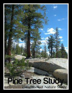 Outdoor Hour Challenge-Winter Series #5 Pine Trees