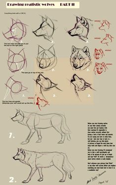 Wolf Drawing Tips Drawing Techniques, Drawing Tips, Drawing Reference, Drawing Ideas, Sketch Drawing, Drawing Art, Cartoon Drawings, Animal Drawings, Drawing Animals