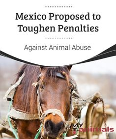 Mexico Proposed to Toughen Penalties Against Animal Abuse   Animal abuse is an evil that seems to have spread to almost every city in the world. However, Mexico is usually mentioned among the countries that, unfortunately, stands out for just that.