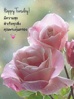 Good Morning Flowers Lotus