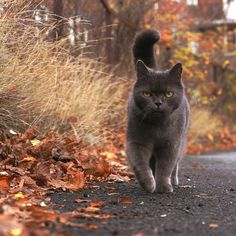 I want this mean looking, scary autumn cat! He looks like he belongs to a witch... he only cuddles up to her