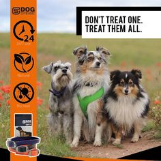 DOG StreamZ® unique dog collars introduce a new magnetic technology for dogs - ideal for all dogs of any age. Non invasive process creating no heat. Suitable for use. Endorsed by champions. Cat Care Tips, Dog Care, Dog Kennel Designs, Unique Dog Collars, Dog Playground, Pumpkin Dog Treats, Dog Agility, Homemade Dog, Dog Behavior