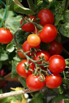 Vertical Farming Urban Gardening