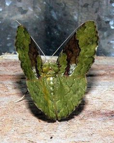 Papua - Indonésia.
