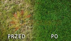 trawnik przed i po zastosowanej metodzie
