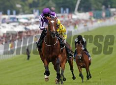 St Nicholas Abbey wins the Coronation Stakes, in a row), Epsom from Dunaden and Joshua Tree Trevor Jones Photo Horse Profile, Order Photos, Photo Store, Thoroughbred Horse, Saint Nicholas, Horse Racing, Equestrian, Saints, Horses