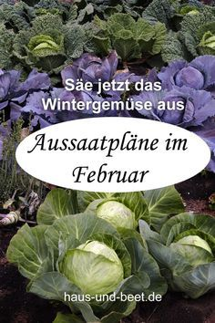 Aussaatpläne im Februar - Bald geht es richtig los Sowing plans in February. You can harvest fast-growing vegetables in spring. The slow growing vegetables will be harvestable in winter. Fast Growing Vegetables, Winter Vegetables, Garden Care, Gardening For Beginners, Gardening Tips, Gardening Supplies, Plan Potager, Le Baobab, Seed Tape