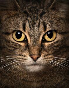 Gatos Cats Salvapantallas Wallpapers HD K UHD Ultra High - 35 cats pulling ridiculous faces imaginable