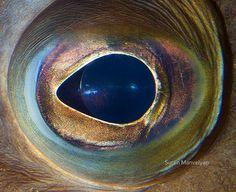» Глаза животных Это интересно!