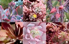 With Valentine's Day around the corner, we're thinking pink with a collection of succulents in sweetheart shades.