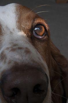 glass eye by dianabog , via Flickr