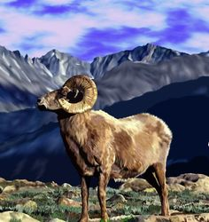 Rocky Mountain Proud - Sally Lannier Artist