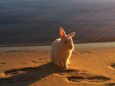Bunny enjoys long walks on the beach - June 20, 2012