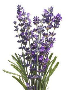 Las mejores plantas medicinales para la mujer