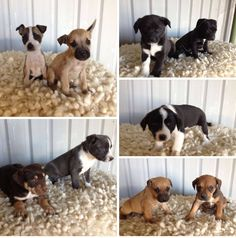 Puppies our new arrivals who will be ready for their new homes on the 15/8/2015