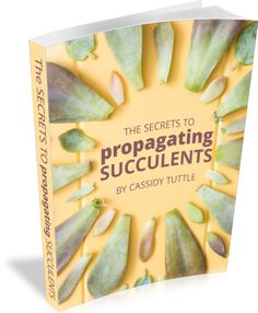 This ebook is fantastic! Learn how to propagating succulents successfully!
