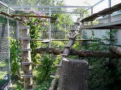 cat run - cage enclosure with real wood log fixtures #cats #Catio