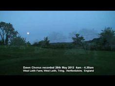 Birdsong Dawn Chorus  England 26th May 2013
