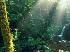TOP 10 THINGS TO DO IN COSTA RICA | Monteverde Cloud Forest