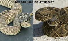 5 Venomous Snakes & Their Look-Alikes - Total Survival Survival Project, Survival Life, Survival Skills, Brown Water Snake, Inland Taipan, Wild Animals Attack, Poisonous Snakes, Coral Snake