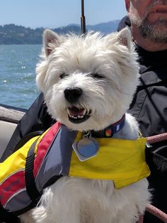 My boy Ernie is a great sailing dog!