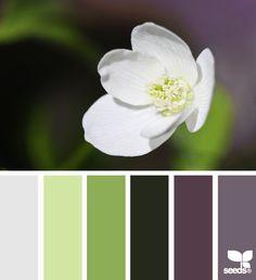 flora hues, kitchen color scheme?