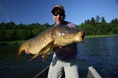 Maine Carp Fishing