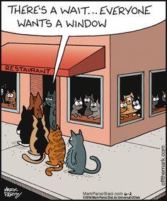 Perfect! #cats #cat humor
