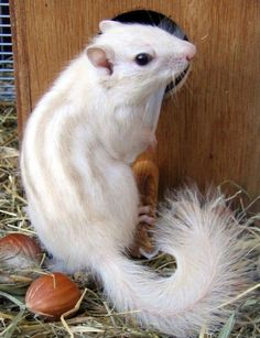 albino prairie dogs | These 61 Albino Animals Are Extremely Rare And Incredibly Beautiful ...