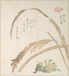 Rice Plant and Butter-Burs  Kubo Shunman  (Japanese, 1757–1820)  Period: Edo period (1615–1868) Date: 19th century Culture: Japan Medium: Polychrome woodblock print (surimono); ink and color on paper