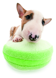 Artlist Collection THE DOG (Bull Terrier) — May 2014