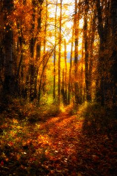 Autumn Trail~ Thanking you for pinning this and many another wood pictures Justine's Halloween!