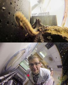 I tried to get some photos of an octopus, but it grabbed the camera and got some of me instead! - Imgur