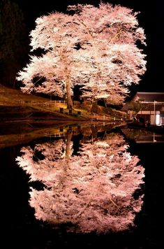 cherry blossom photography - The Most Beautiful and #Romantic Japanese #Cherry Blossom Tree #Photos to see
