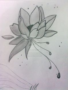 Lotus Flower Drawing | ... art drawings landscapes scenery lotus flower silly sketch draw on a4
