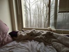 "ophore:  "" My dorm room is so cozy tbh, especially when it's this foggy out  """