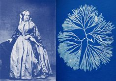 """National Women's History Month-We honor Anna Atkins (1799-1871), the """"Mother of Cyanotype""""  English photographer and botanist, Atkins used cyanotype to record botanical specimens. Her earliest work is entitled British Algae: Cyanotype Impressions (1843). She was a scientist with an artist's flare!"""