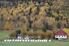 Los campos en Noruega Explore, Painting, Fields, Norway, Painting Art, Paintings, Exploring, Drawings