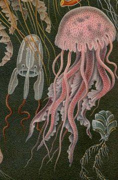 Undersea creatures - natural illustration