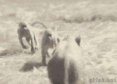 Hop on my back, bros…