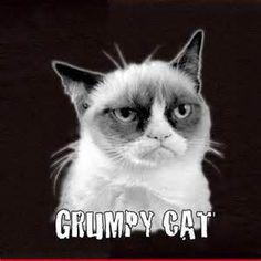 Grumpy Cat