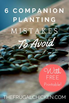 6 companion planting mistakes to avoid