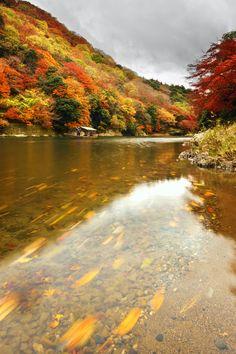 """Arashiyama. Kyoto. Japan.""""-"""". ku."""