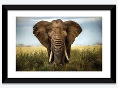 Encounters In Serengeti by Alberto Ghizzi Panizza 1-piece Canvas Art Print
