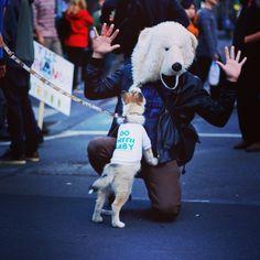 Polar meeting #dog #cute #WWF #Australia #Pauliebeer (à Melbourne, Australia)