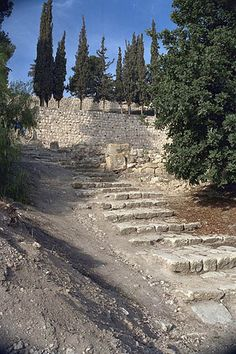 Steps to the House of Caiaphas- when we were there we heard a rooster crow. These are the same steps Jesus would have walked up.