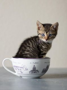 Twitter / EmrgencyKittens: I'd like a cup o kitten to ...